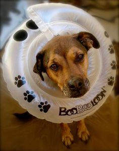 5 Alternatives to the Cone of Shame | Dogster