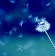 Dandelion Puff - Make a Wish - in Shades of Blue Blue Dream, Love Blue, Dandelion Clock, Dandelion Wish, Dandelion Seeds, Dandelion Nursery, Blowing Dandelion, Dandelion Painting, Painting Art