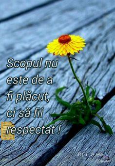 Respect, Spanish, Spanish Language, Spain