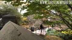 På kanten af Central Park // On the edge of #CentralPark  #turistinewyork #nycandtours #sightseeing #onlineconcierge #concierge #walkingtours #tours #seværdigheder #park #newyorkrejsetips #newyork #turistiny #turistinyc #påferie #turengårtil #tourguide #nyc #newyorkcity #danskinewyork #dansk #danmark #denmark #danish #manhattan