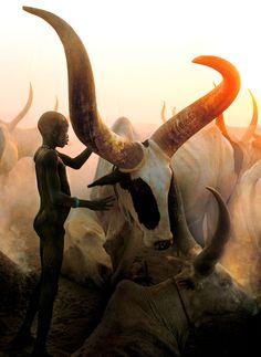 serious horns