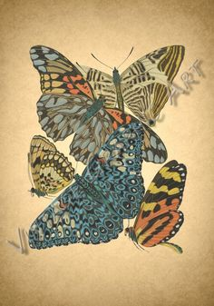 Image Shows, Printable Wall Art, Background Images, Moth, Wall Art Prints, Decoupage, Card Making, Clip Art, Butterfly