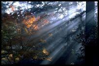 Nature - Via thenewspatroller.com