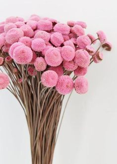 This unique and adorable dried floral button bundle in pink is the perfect addition to your floral arrangements to add texture and color. Great to fill DIY bouquets and centerpieces, or even make boutonnieres. Diy Wedding Bouquet, Diy Bouquet, Wedding Nails, Diy Flowers, Flower Pots, Cactus Flower, Purple Flowers, Turquoise Wedding Flowers, Flowers Background