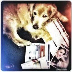 Auch #Firmenhund Nemo mag unsere Lehrgänge zur #Weiterbildung und sieht sich das ein wenig genauer an. wwedu.com #fernstudium #mba #erwachsenenbildung #broschüre #elearning #studium #hund #GoldenRetriever #clever #dog #wwedu #business #management #skills #study #berufsbegleitend #office #büro #read #folder E Learning, Office, Education, Dogs, Instagram Posts, Animals, Further Education, Pet Dogs, Animales