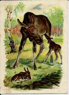 Elk in forest - Vintage  Russian Postcard USSR 1959 by LucyMarket on Etsy