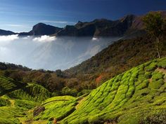 Abad hotels offers the stay in Munnar resorts and enjoy the munnar hill stations during your honeymoon. The luxury resorts in Munnar is the best spot for the stay and kerala honeymoon packages. Abad also offers the alleppey houseboats cruising through the backaters in Kerala.