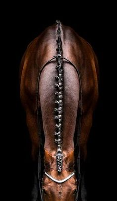 Gorgeous picture. Just highlights a quiet elegance about show hunters