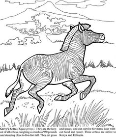 find this pin and more on coloring horse zebra