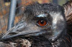 Portfolio Multimedeia: Heijastun miltei strutsin silmästä / dinosaurusten jälkeläisen katse