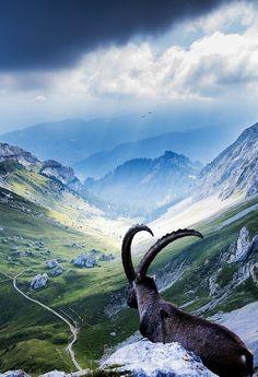 Pilatus, Switzerland | by Robin Kamp.