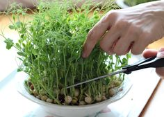 Fungi, Celery, Flora, Goodies, Vegetables, Plants, Cottage, Gardening, Lifestyle