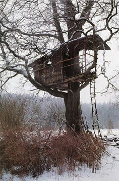 Treehouse in the snow. Bring hot cocoa.