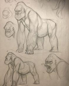 CDA class demo on gorilla #sketch #demo #gorilla #ape #conceptdesignacademy #animal #animalanatomy #animaldrawing #jonkuo #jonnadon1 #jonnadon #jonathankuo