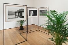 Yuki Kimura (Japanese, b. 1971). KATSURA. 2012. Gelatin silver prints, frames, iron, and plants, overall 15 x 17' (4.57 x 5.18 m). The Museum of Modern Art, New York. Committee on Photography Fund. Installation view of Ocean of Images: New Photography 2015. The Museum of Modern Art, New York, November 7, 2015–March 20, 2016. © 2016 The Museum of Modern Art. Photo: Thomas Griesel