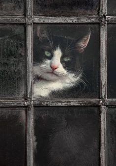 """coisasdetere: """" Black and White Cat by Patricia Jacobs """" Beautiful !!! \O/"""