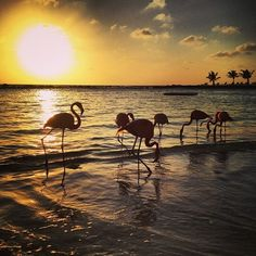 Flamingos and sunsets. What else could you need? All in one happy island - Aruba. Book your vacation today with JetBlue Getaways (air + hotel).