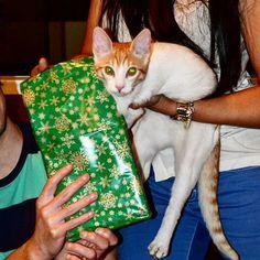 Tito recibiendo su regalo de navidad  #tbt #xmas