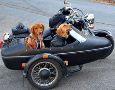 gotta love this! Motorcycle Camping, Motorcycle Garage, Scooters, Harley Davidson Sidecar, Bike With Sidecar, Black Labs Dogs, Dog Lady, Cute Dogs And Puppies, Doggies