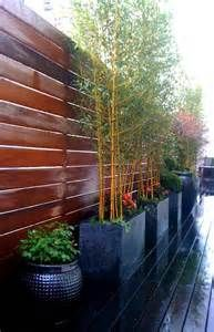 Potted Bamboo | Outdoor Ideas | Pinterest