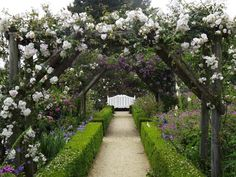 Mottisfont Abbey, it's famous rose gardens in June