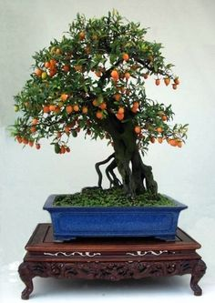 A Chinese penjing (bonsai) with wooden bonsai table
