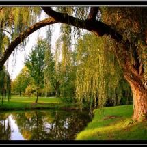 Can't forget a pond & a weeping willow tree in the backyard..or better yet, a magic apple tree with Narnian powers