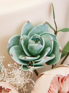 Succulents are a popular choice for wedding cakes and you can find out how to make them look really realistic with Fran Willoughby.
