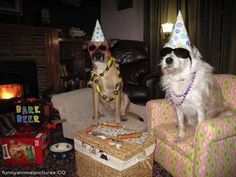 cool birthday party