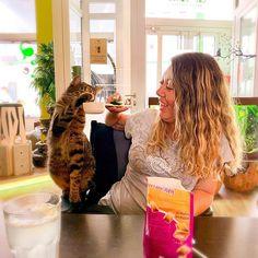 Ich werde #Katzenverhaltensberaterin  Gestern habe ich mich endlich für meine nächste Ausbildung angemeldet & es geht ausnahmsweise nicht um Hunde  #Clickertraining mit Katzen ist ja das eine #Verhaltensberatung das andere. Ich bin guter Dinge & glaube dass ich bis Ende des Jahres mit der Ausbildung durch bin  Heute kommt übrigens ganz spezieller Besuch für Kiwi! Mehr dazu später  #pfoetchentraining #lycheethepoodle #katzenverhaltensberatung #katzentraining #catfluencer #petfluencer #cats… Kiwi, Instagram, Good Things, Faith, Cat Behavior, Training, Pet Dogs