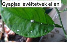 Balcony Garden, Garden Plants, Pest Control, Organic Gardening, Plant Leaves, Flowers, Outdoor, Gardens, Google