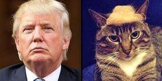 Top 12 Funniest Trump Your Cat Photos
