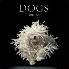 Beautiful photography book about dogs!  Dogs: Lewis Blackwell, Tim Flach: 9780810996533: Amazon.com: Books