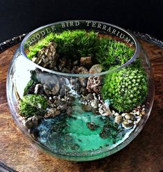 Ocean Scene Bowl Terrarium with Live Plants- A tropical seascape scene is plan. - Ocean Scene Bowl Terrarium with Live Plants- A tropical seascape scene is planted using live moss - Terrarium Diy, Terrarium Bowls, Terrarium Scene, Water Terrarium, Orchid Terrarium, Terrarium Supplies, Terrarium Wedding, Wedding Plants, Ocean Scenes