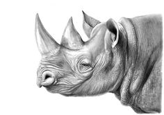 Animal Sketches, Animal Drawings, Art Sketches, Beautiful Pencil Drawings, Cool Drawings, Rhino Tattoo, Rhino Art, Arte Steampunk, Scratchboard Art