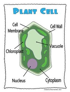 Plant cell diagram other diagrams may be more detailed but the plant unit part 1 needs of plants plant parts plant cells ccuart Images