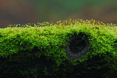 Woodland moss - by Fly bye!