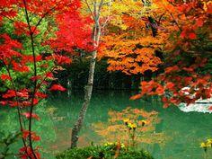 Nueve lugares admirar hojas arce China Montaña Qixia, Jiangsu