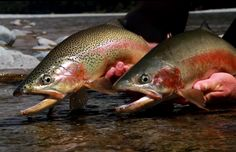 Video: A Double Rainbow in New Zealand - Orvis News