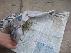 Newspaper treat ball Rabbit toy making and enrichment activities. - Rabbits United Forum