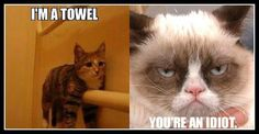 I'm a towel ... You're an idiot