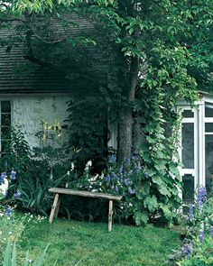 One gardener's expertise with color and form isn't confined to the landscape.    Hollyhocks reach for the roof of landscape designer Judy Tomkins's home. The screened porch is surrounded by beds of blue and white delphiniums mixed with white cimicifuga. A rustic bench makes an ideal resting spot.
