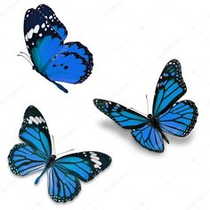 Three purple butterfly, isolated on white background Blue Butterfly Tattoo, Butterfly Tattoo On Shoulder, Butterfly Drawing, Butterfly Wallpaper, Purple Butterfly, Monarch Butterfly, Borboleta Tattoo, Floral Tattoo Design, Butterfly Pictures
