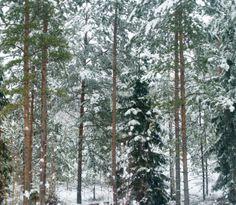 road trip  nama.fi