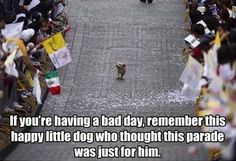 This dog felt like the most special dog in the world, just for a day!