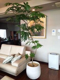 890 Best Artificial Plants Living Room Indoor Palms images ...