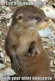 i have always wanted a pet otter. i have a collection of otter stuffed animals from forever ago Cute Wild Animals, Animals Beautiful, Baby Animals, Funny Animals, Otters Funny, Baby Giraffes, Adorable Animals, Beautiful Images, Animal Pictures