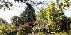 Natur und Leben: Zitat des Tages - Wer den Baum nur als Brennholz.....