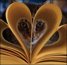 Heart!  Nothing better than a good book and a warm kitty...