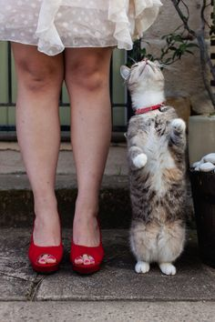 Cat and retro red shoes